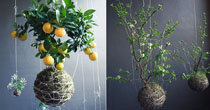 Modern & Eco-Friendly Indoor Gardens